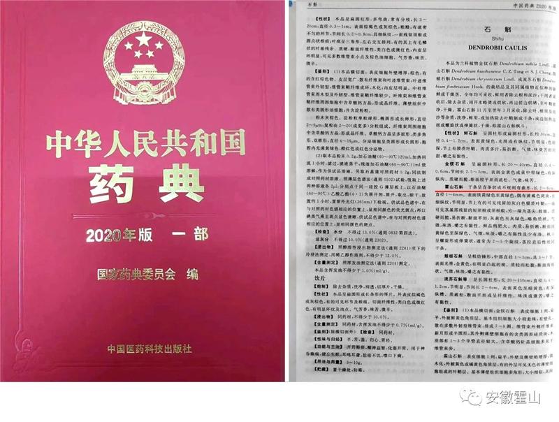 斛生记|霍山石斛|中国药典