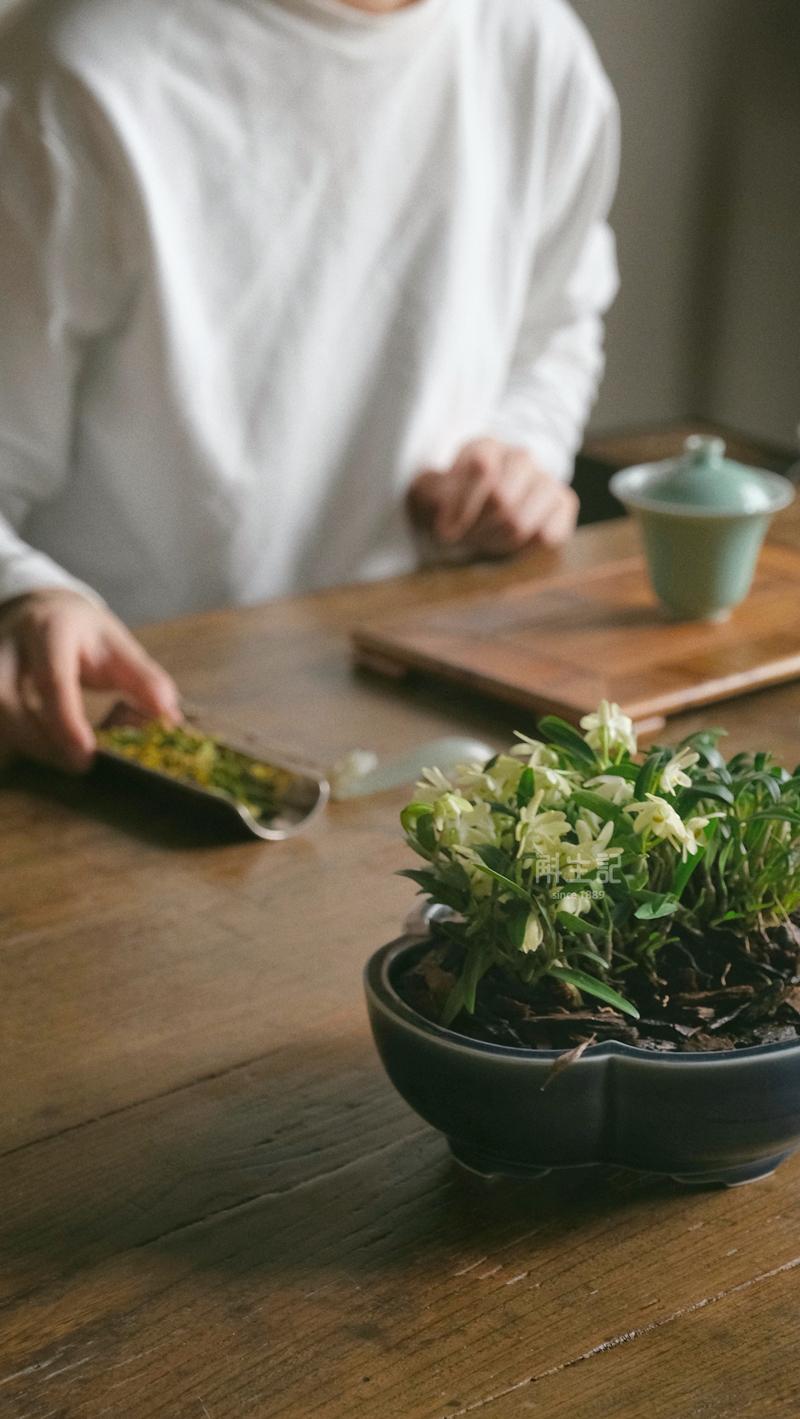斛生记|霍山石斛|春燥